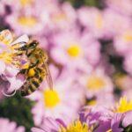 Pengobatan dengan lebah dan turunannya