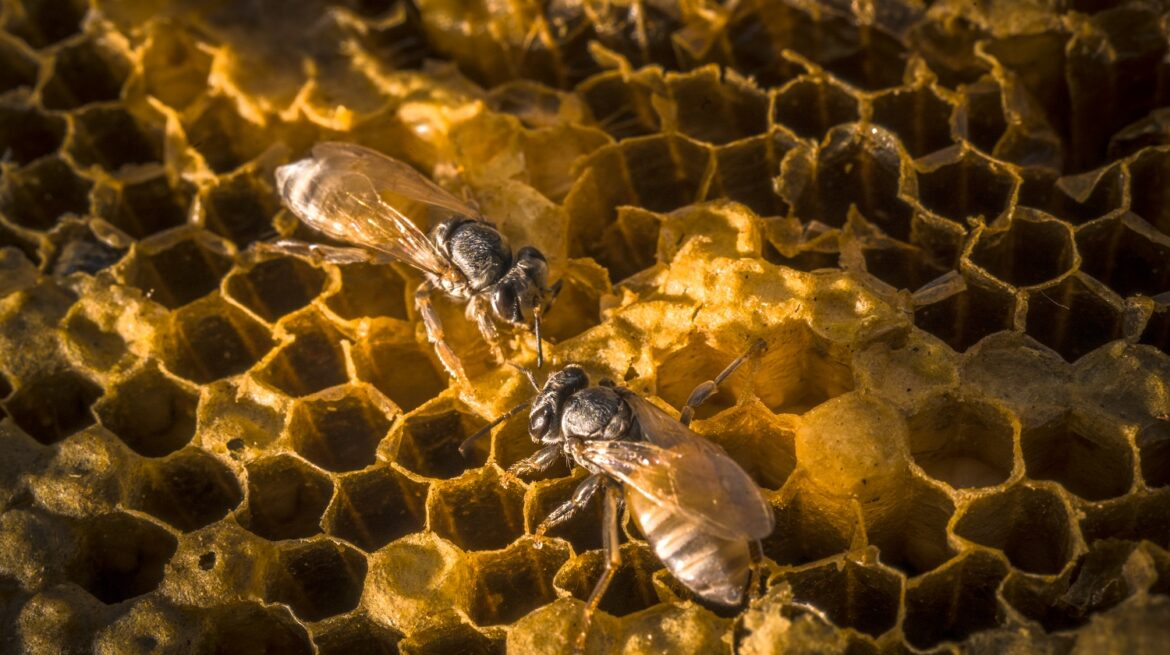 working-bees-nature-honeycomb-with-sweet-honey